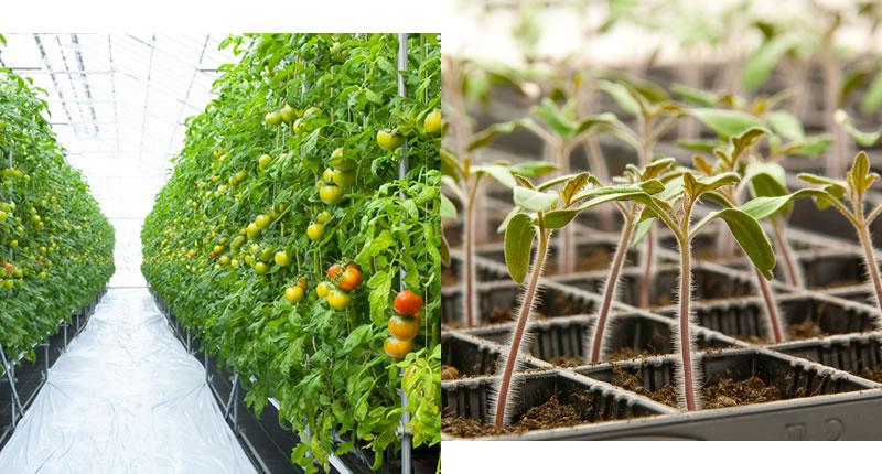 植物にやさしい栽培環境