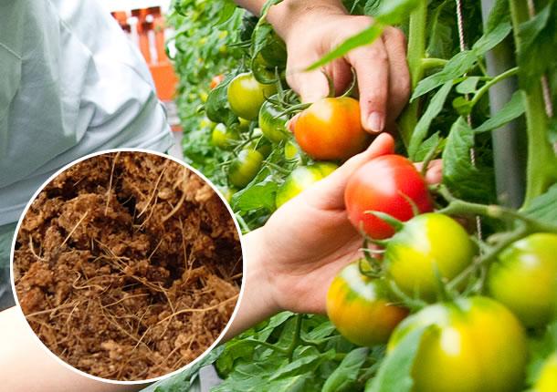 環境にやさしい栽培技術