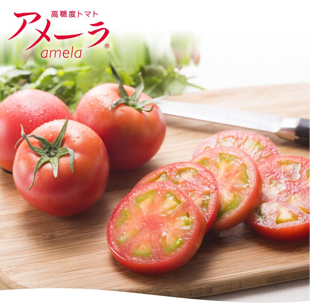 高糖度トマト アメーラ amela
